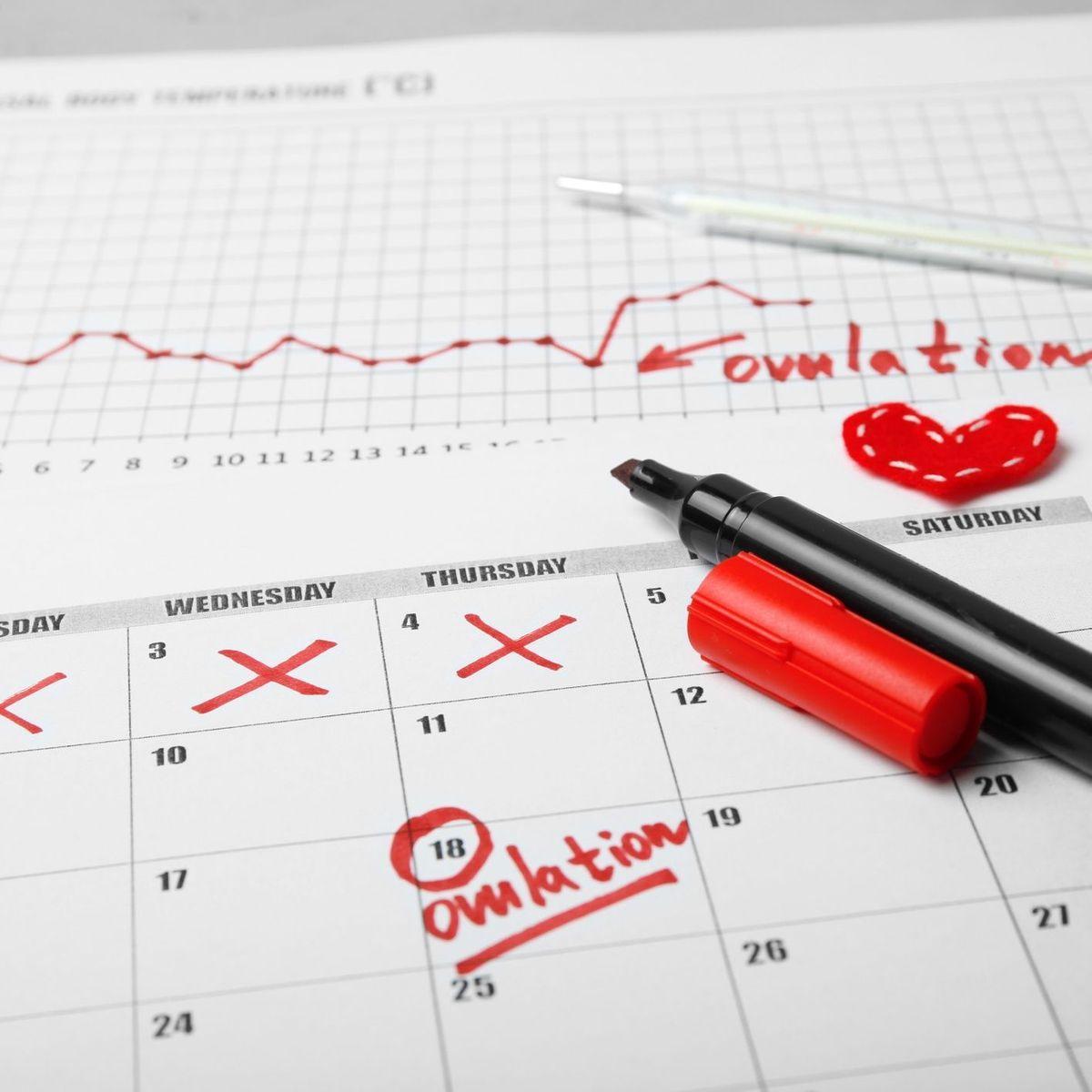 L'ovulation et période de fertilité : ce qu'il faut savoir